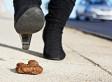 Une ville ontarienne trouve une utilité au caca de chien