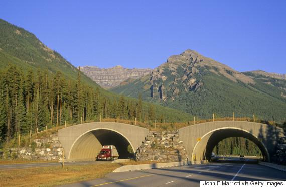 wildlife overpass alberta