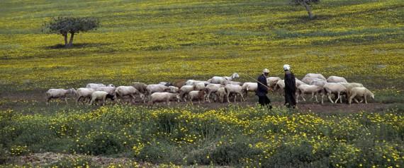 AGRICULTURE ALGERIA