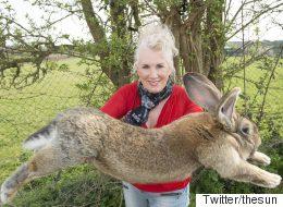 거대한 토끼가 유나이티드 비행기에서 죽었다