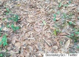 Saurez-vous trouver le serpent qui se cache sur cette photo?