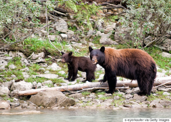bear rockies provincial park