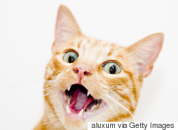 '고양이와의 동거'가 어떤 것인지 말하는 트윗 23