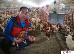 닭 5000마리가 '살처분' 위기에서 벗어나다