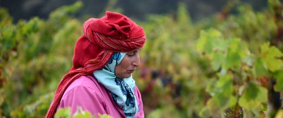 AGRICULTURE TUNISIA