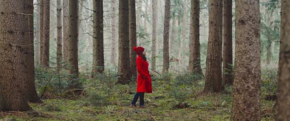الأشجار لها حياة سرية لم نتصورها من قبل