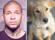 Puppy Torture Posted On YouTube: Chicago Man, 13-Year-Old Boy Arrested