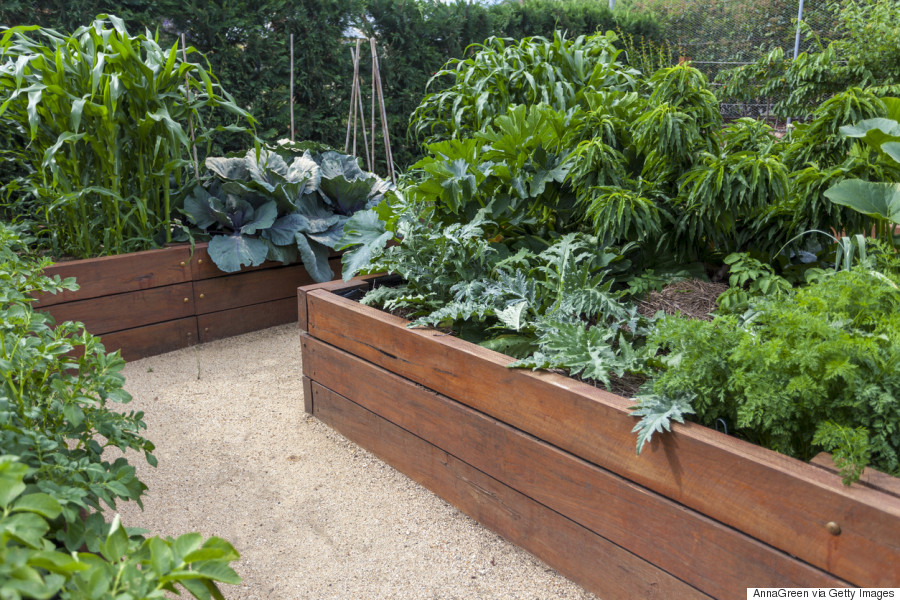 Vegetable Garden 101 How To Have A Plentiful Harvest