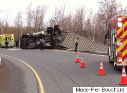 Accident sur l'A-55: un camion-remorque transportant des vaches se renverse