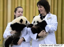 Staff At Canada's Largest Zoo Walk Off The Job