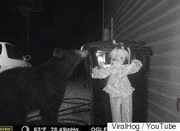 거대한 곰을 쫓아버린 공포의 '웃는 광대' (영상)