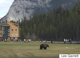 Grizzly Strolls Onto Banff Rugby Pitch During Practice