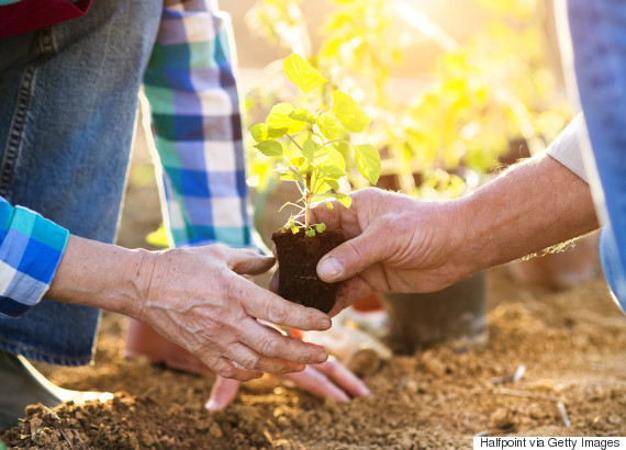 planting tree yard
