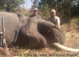 Ein Großwildjäger schießt auf einen Elefanten - dann schlägt die Natur zurück