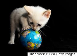 Ούτε επίπεδη, ούτε σφαιρική. Η Γη έχει το σχήμα μια παιχνιδιάρας γάτας και ιδού η απόδειξη