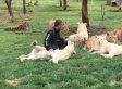 Der Mann streichelt die Löwen - und sieht nicht, was hinter seinem Rücken passiert