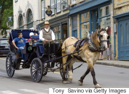 Quebec Petition To Ban Horse-Drawn Carriages Gets 34,000 Signatures