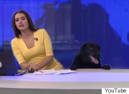 Βίντεο: Σκύλος διακόπτει δελτίο ειδήσεων