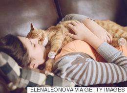 고양이를 좋아하는 사람을 위한 꿈의 직업이 생겼다