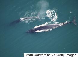 Φάλαινα 12 μέτρων εθεάθη από επιβάτες τουριστικού σκάφους στην Σύρο