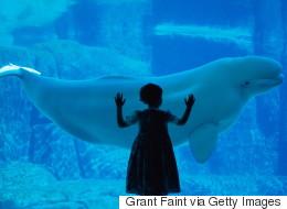 The Vancouver Aquarium Is Swimming In 'Alternative Facts'