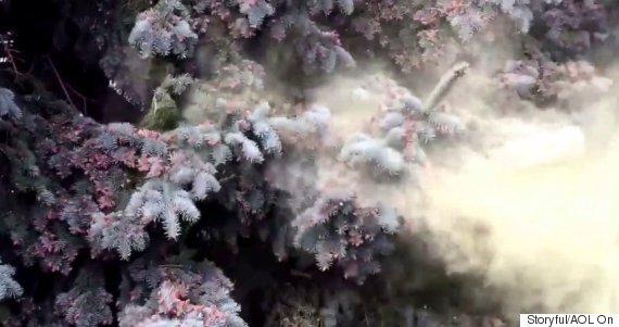 pollen ontario