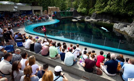 vancouver aquarium show