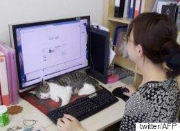 고양이를 입양하면 보너스를 주는 일본 회사(사진)