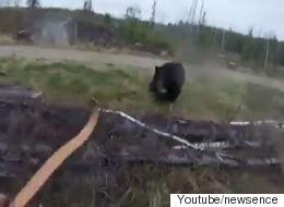 Bίντεο: Εφιαλτική μάχη σώμα με σώμα μεταξύ μεγαλόσωμης αρκούδας και κυνηγού