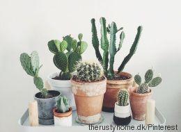 Inspiration déco: passion cactus