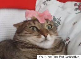 고양이의 멍청한 모습만 모아 놓은 영상을 보니 정말 멍청하다(영상)