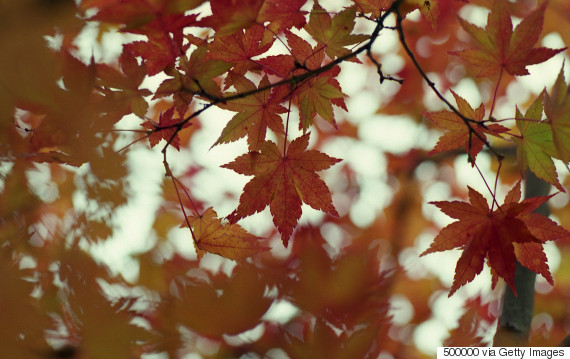 japan autumn leaves fall