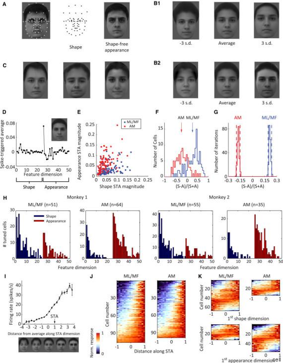 Vavel.gr | Επανάσταση στη νευροεπιστήμη: Νέα έρευνα μας φέρνει πιο κοντά στην αποκάλυψη των ανθρωπίνων σκέψεων
