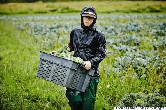 farm harvest