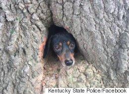 나무에 낀 강아지를 만났다(사진)