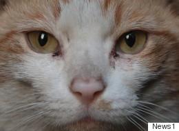 길고양이 사진전 '너는 나다' 10일부터 열린다