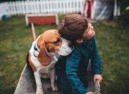غير الصيد والحراسة.. يمكنك تربية كلب في المنزل وفقاً لهذه الشروط