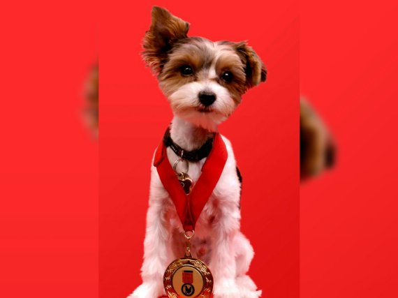 purina animal hall of fame