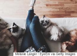 Refuser le rôle de la «crazy cat lady»