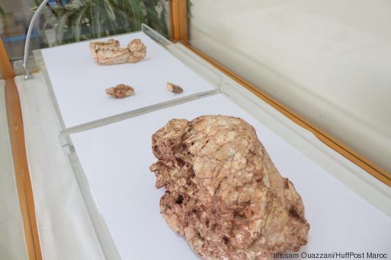 fossiles homo sapiens 1