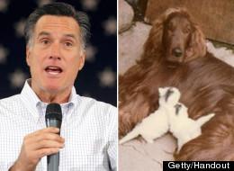 Mitt Romney Seamus Dog
