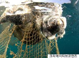트럼프가 기후협약 탈퇴에 이어 고래·거북이 혼획을 허용했다