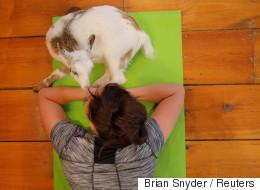 Du yoga avec des chèvres, la dernière mode aux États-Unis