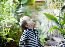 Achtung Lebensgefahr: Diese Pflanze solltet ihr nicht in eurer Wohnung haben, wenn ihr Kinder habt