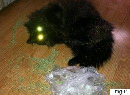 '캣닢'을 주체하지 못한 고양이들(사진)