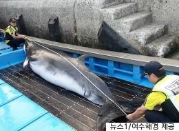 그물 걸린 밍크고래는 정말 '바다의 로또'일까?