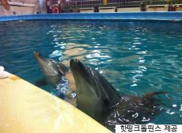 홀로 남은 큰돌고래 '태지'가 결국 서울대공원을 떠난다