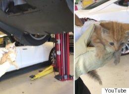 테슬라 범퍼에 낀 고양이가 구조된 순간(영상)