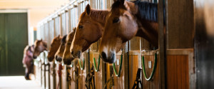 Racehorse Stable