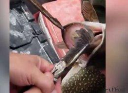 Überraschung! Kanadische Angler machen kuriosen Fund in Fisch
